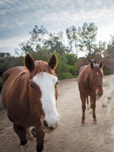 two-horses-cropped